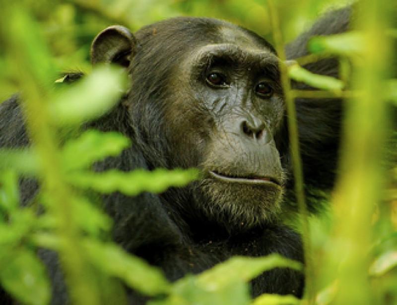 Un tiers des animaux sauvages a disparu en 50 ans — Planète