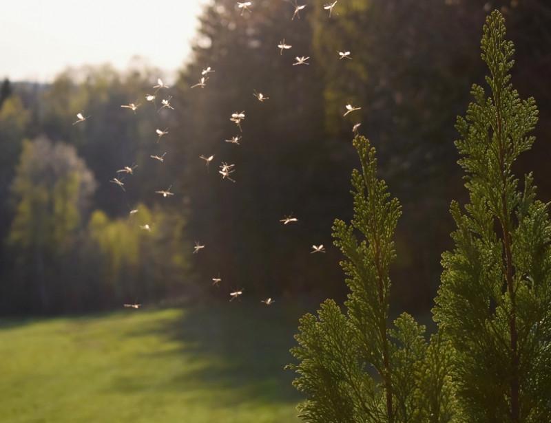 Cinq Methodes Naturelles Pour Faire Fuir Les Moustiques
