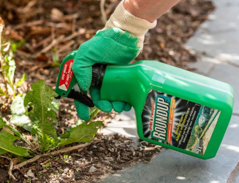 Comment Se Passer De Pesticides De Synthese A La Maison