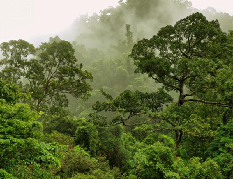 Les incendies en Australie ont détruit 20 % des forêts selon une étude